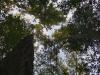 P5020121-akacija.jpg